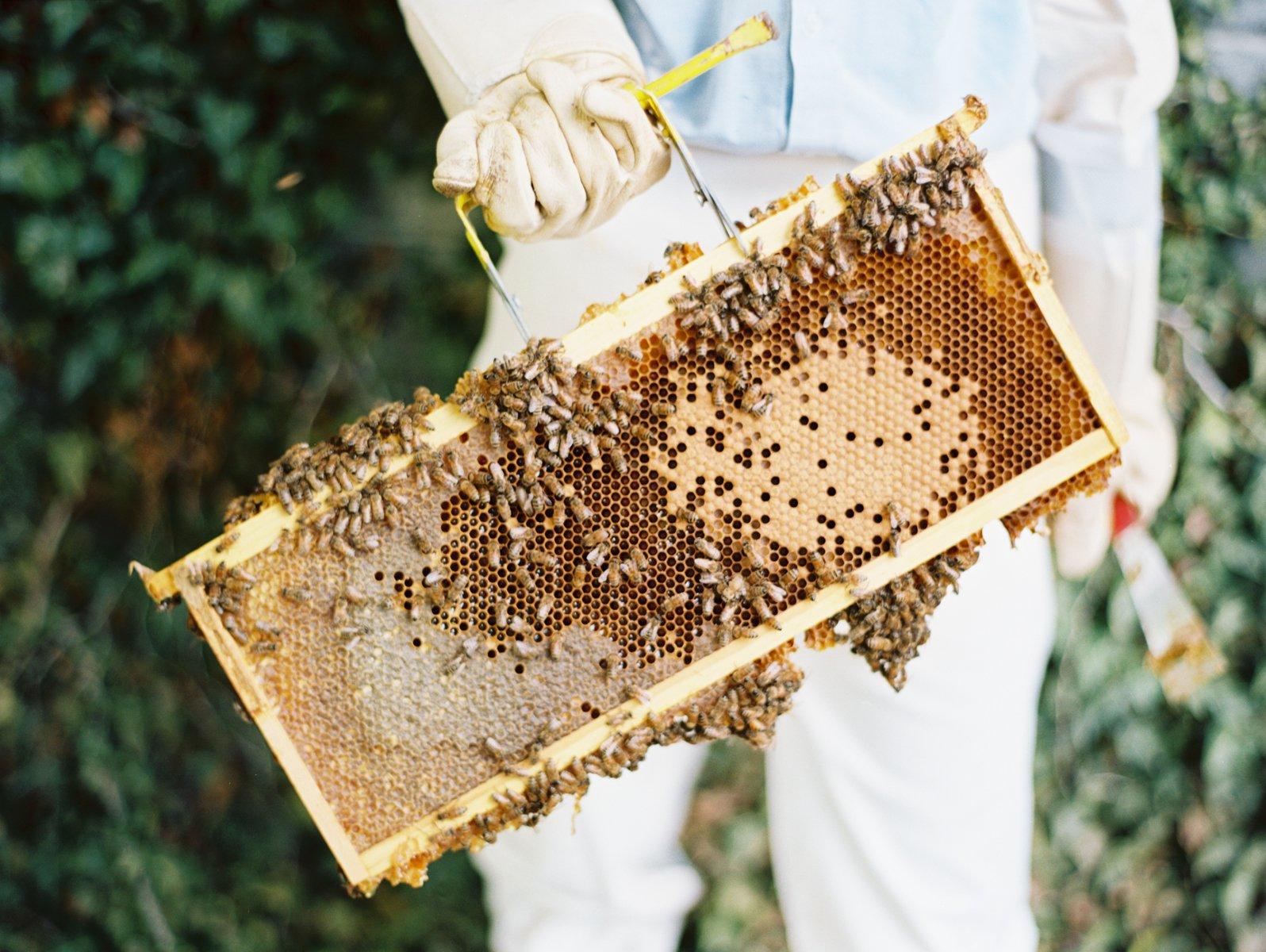 perché il miele fa bene
