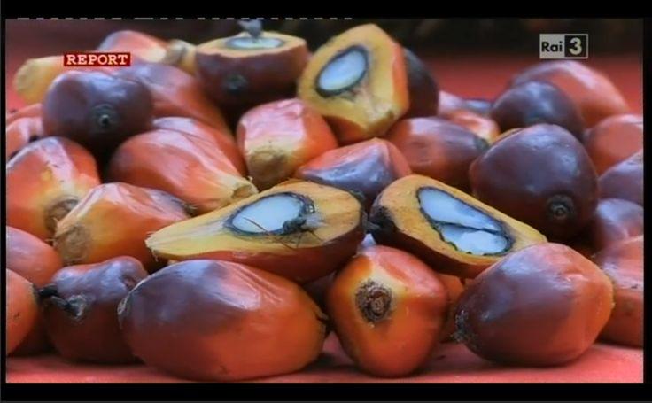 Report olio di palma